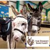 Donkey Sanctuary Ivybridge