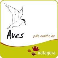 Formation ornitho Aves