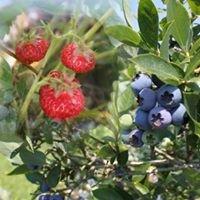 Obstplantage Gut Rottmannshagen