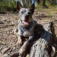 Arightway Dog Training