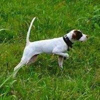 Condit Quail Farm & Bird Dog Training