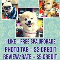 All Creatures Pet Salon & Spa