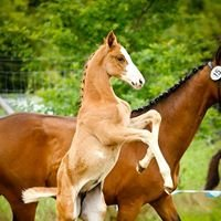 Pferdezucht mit Liebe