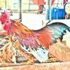樂咖蚯蚓有雞農場
