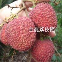 金龍荔枝園-牛奶玉荷包荔枝