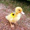 台南鴨莊休閒農場 Tainan Duck Leisure Farm