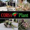 Corsa Plant