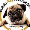 Buffalo Pug & Small Breed Rescue, Inc.