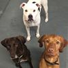 CentreBarks Doggie Day Care