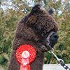 Inca Alpaca - Black Alpaca