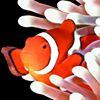 Cascade Koi & Aquatics Online Store