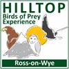 Hill Top Birds of Prey