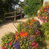 Eggesford Garden Centre