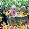 Day Lily Nursery