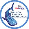 Whale Shark Mexico / Tiburón ballena México