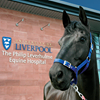 The Philip Leverhulme Equine Hospital