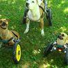 Eddie's Wheels for Pets