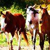 Complete Equestrian Company