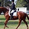 Singleton Dressage Club
