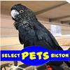 Select Pets