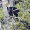 Yellowstone Tour Guides thumb