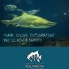 NC Aquarium Shark Dive