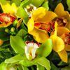 Flowers by Cymbidium Barnes