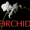 The New Orchid Wellbeing Centre