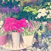 Floral Design House