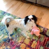 The Shag N Wag Pet Salon & Training