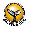 Balyena.org