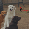 Dog Ranch Resort