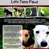 Love Those Paws Dog Walking Service