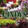 Cindys Home and Garden