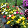The Hanging Basket Greenhouse & Nursery