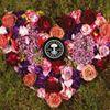 Neals Yard Remedies Organic - Hayley Wren Colchester Essex