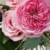 Merit & Vine Floral