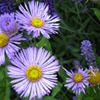 Glebe Mountain Gardens & Landscaping