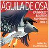 Aguila De Osa