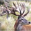 Backcountry New Zealand Hunting and Fishing Guides