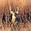 Kansas Wildlife, Parks & Tourism - El Dorado State Park