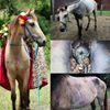 Cruzan Cowgirls Horse Rescue