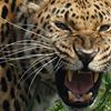 Dimension Wildlife Photography