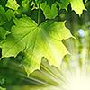 Northants Tree Services
