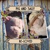 Pig and Sally re-loved and vintage furnishings, Yorkshire
