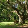 Shropshire, Twisted Oak Tree Services