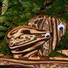 Fernwood NZ - Keepsakes from the Bush