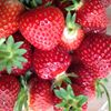 Grange Farm Soft Fruit PYO