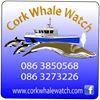 Cork Whale Watch