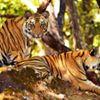 Nakshatra Resort Rishikesh